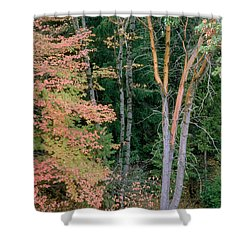 Autumn Scene Shower Curtain by Mark Greenberg