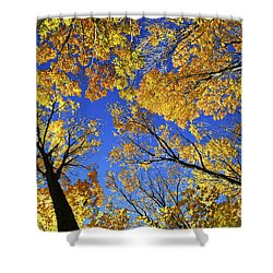 Autumn Treetops Shower Curtain by Elena Elisseeva