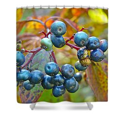 Autumn Viburnum Berries Series #4 Shower Curtain by Mother Nature