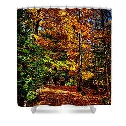 Autumn Walk Shower Curtain by David Patterson