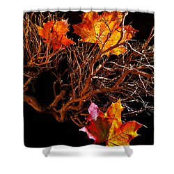 Shower Curtain featuring the photograph Autumnal Feelings by Beverly Cash