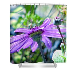 Avatar's Pericallis Shower Curtain by Rory Sagner