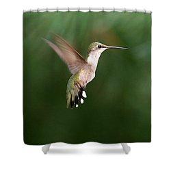 Awesome Hummingbird Shower Curtain by Sabrina L Ryan
