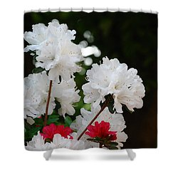 Shower Curtain featuring the photograph Azaleas by Linda Mesibov
