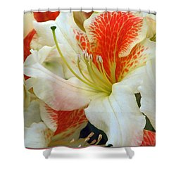 Shower Curtain featuring the photograph Azaleodendron Glory Of Littleworth by Chris Anderson