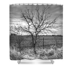 B/w Tree In The Country Shower Curtain