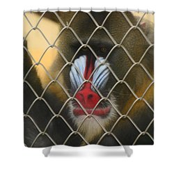 Shower Curtain featuring the photograph Baboon Behind Bars by Kym Backland