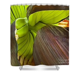Baby Bananas Shower Curtain by Heiko Koehrer-Wagner