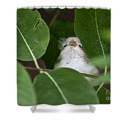 Shower Curtain featuring the photograph Baby Bird Peeping In The Bushes by Jeannette Hunt