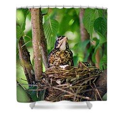 Baby Birds Shower Curtain by CJ Clark