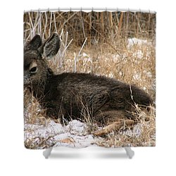 Baby Deer At Rest Shower Curtain by Nola Lee Kelsey