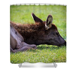 Shower Curtain featuring the photograph Baby Elk by Steve McKinzie