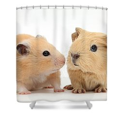 Baby Guinea Pig And Golden Hamster Shower Curtain by Mark Taylor