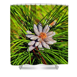 Baby Pine Cones Shower Curtain by David Lee Thompson