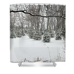 Baby Pines Shower Curtain by Aimee L Maher Photography and Art Visit ALMGallerydotcom