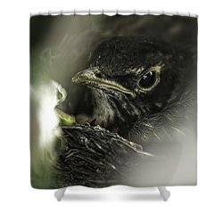 Shower Curtain featuring the photograph Baby Robin by Tom Gort
