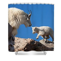 Shower Curtain featuring the photograph Baby Steps by Jim Garrison