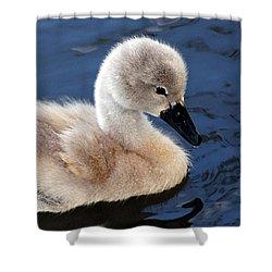 Baby Swan Shower Curtain