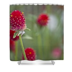 Bachelor's Button Shower Curtain by Lisa Plymell