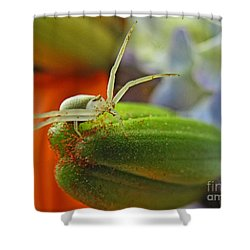 Shower Curtain featuring the photograph Back Off by Debbie Portwood