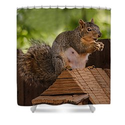 Back Yard Pet Shower Curtain by Robert Bales