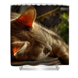 Backlit Ears Shower Curtain by David Patterson