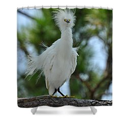 Bad Hair Day Shower Curtain by Rick Frost