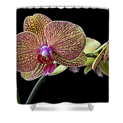 Baeutiful Orchids Shower Curtain by Garry Gay