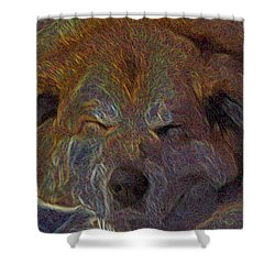 Baily May Shower Curtain by One Rude Dawg Orcutt