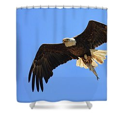 Bald Eagle Catch Shower Curtain