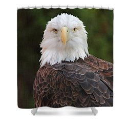 Shower Curtain featuring the photograph Bald Eagle by Coby Cooper