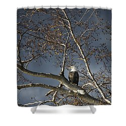 Bald Eagle In A Tree Shower Curtain by Con Tanasiuk
