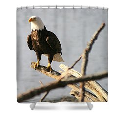 Shower Curtain featuring the photograph Bald Eagle On Driftwood by Kym Backland