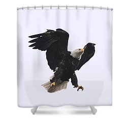 Shower Curtain featuring the photograph Bald Eagle Tallons Open by Kym Backland