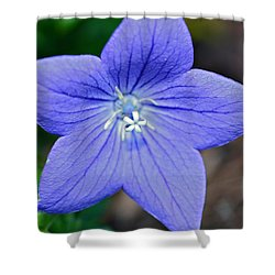 Balloon Flower Shower Curtain by Susan Leggett