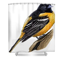 Baltimore Oriole Shower Curtain by Roger Hall and Photo Researchers