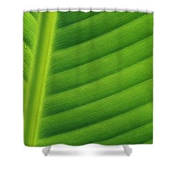 Banana Musa Sp Close Up Of Leaf Shower Curtain by Cyril Ruoso