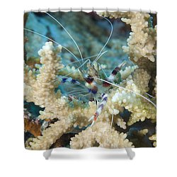 Banded Coral Shrimp Amongst Staghorn Shower Curtain by Steve Jones
