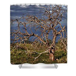 Bare Tree In Hana Maui Shower Curtain