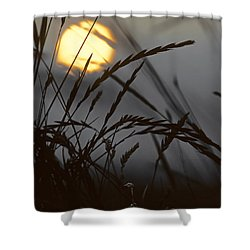 Barley Sunrise Shower Curtain by Nigel Forster