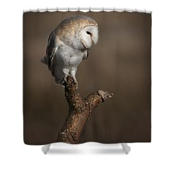 Barn Owl On The Lookout Shower Curtain