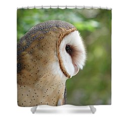 Barn Owl Shower Curtain by Randy J Heath