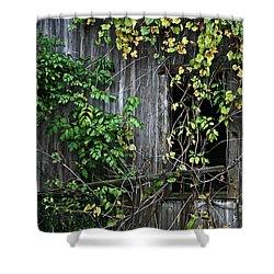 Barn Window Vine Shower Curtain