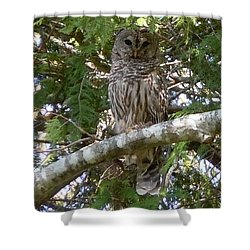 Shower Curtain featuring the photograph Barred Owl  by Francine Frank