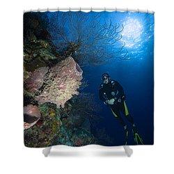 Barrel Sponge And Diver, Belize Shower Curtain by Todd Winner