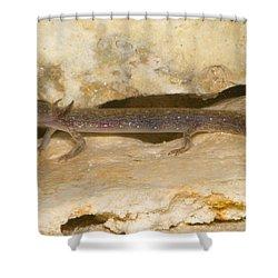 Barton Springs Salmander Shower Curtain by Dante Fenolio