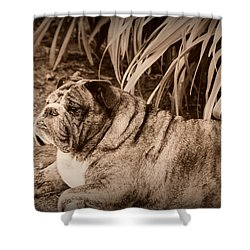 Shower Curtain featuring the photograph Baydie by Jeanette C Landstrom