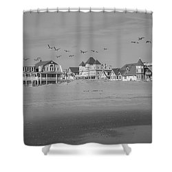 Beach Birds Shower Curtain