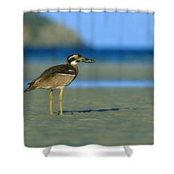 Beach Stone-curlew Shower Curtain by Bruce J Robinson