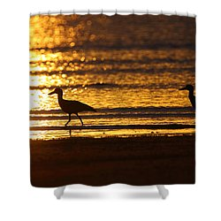 Beach Stone-curlews At Sunset Shower Curtain by Bruce J Robinson